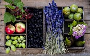 Картинка осень, цветы, ягоды, корзина, яблоки, фрукты, сливы, желуди, ежевика, лаванда