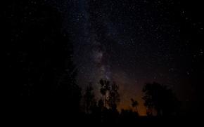 Картинка космос, звезды, деревья, ночь, пространство, млечный путь