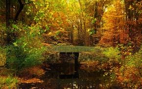 Картинка осень, лес, листья, деревья, мост, пруд, парк