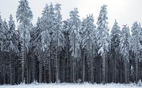 Картинка зима, лес, пейзаж