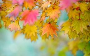 Картинка листья, фон, размытость, осенние