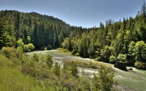 Картинка деревья, река, вид