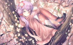 Картинка девушка, цветы, улыбка, дерево, аниме, сакура, арт, vocaloid, yuzuki yukari, t.m, voiceroid, aqua6233