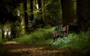 Обои скамья, парк, деревья