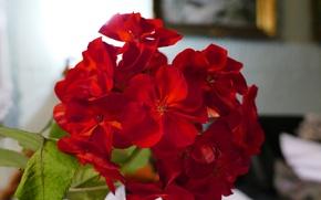 Картинка макро, цветы, красный, природа