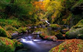Обои осень, лес, листья, река, ручей, камни, мох, Природа