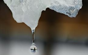 Обои Капля, лед, зима