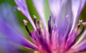 Обои цветок, липестки, flash of summer