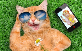 Обои smart phone, cat, grass