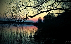 Картинка природа, камыши, речка, Пейзаж