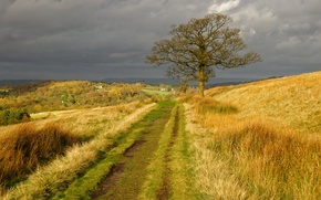 Картинка дорога, осень, трава, природа, дерево, холмы, Англия