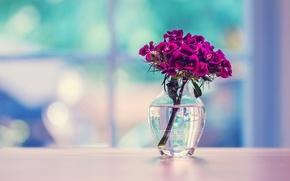 Картинка стекло, поверхность, цветы, ваза, гвоздика, турецкая