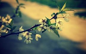 Картинка цветы, весна, сакура