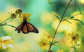Обои цветы, фото, макро, бабочка, растения