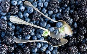 Обои ягоды, Anna Verdina, голубика, ложки, ежевика, черника
