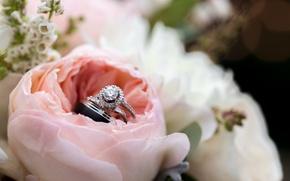 Картинка роза, кольца, лепестки