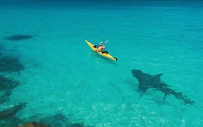 Обои лодка, акула, упс