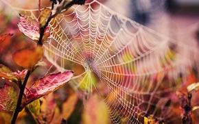 Картинка осень, листья, капли, макро, природа, паутина, ветка