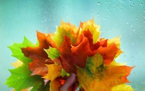 Картинка листики, стекло, широкоэкранные, рука, листочки, leaves, HD wallpapers, обои, дождь, листья, вода, полноэкранные, background, желтый, ...