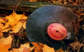 Обои пластинка, листва, ссср