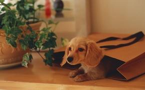Обои растение, пакет, щенок