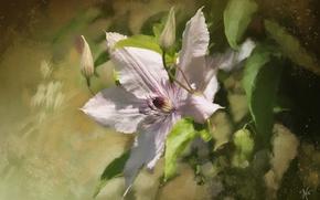 Картинка цветок, текстура, клематис