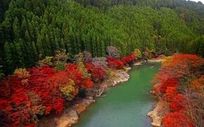 Картинка лес, деревья, река, Япония, Japan, Kyoto, Oi River, Arashiyama