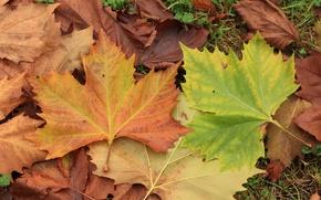 Картинка Осень, Листья, Листва, Autumn, Colors, Leaves