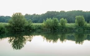 Картинка лес, лето, вечер, Курск