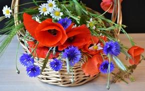 Картинка цветы, корзина, маки, ромашки, колосья, васильки