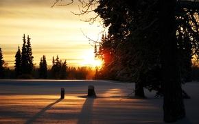 Картинка зима, солнце, снег, деревья, ветви, вечер, Лес, пеньки, закат.