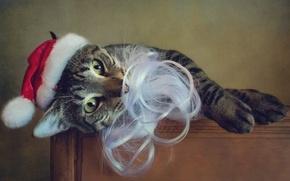 Картинка кошка, кот, взгляд, поза, стиль, ретро, стол, портрет, обработка, лапы, Рождество, Новый год, лежит, борода, …