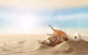 Картинка песок, пляж, небо, ракушка, деревяшка