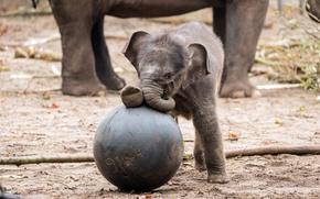 Картинка игра, слон, малыш