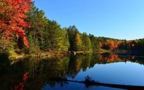 Картинка осень, лес, небо, деревья, закат, озеро, пруд