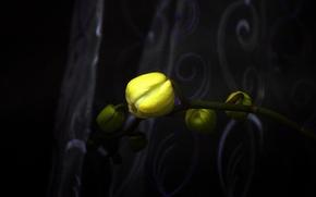Картинка flower, yellow, macro