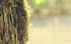 Картинка лето, свет, деревья, дерево, настроение, фокус, размытие, весна, ствол, summer, кора, широкоформатные обои, резкость, macro, …
