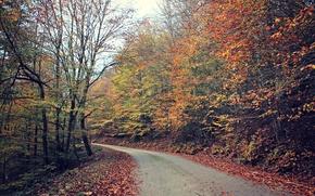 Картинка дорога, лес, листья, деревья