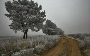 Картинка иней, дорога, осень, деревья