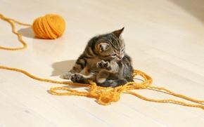 Обои котенок, клубок.нитки, полосатый