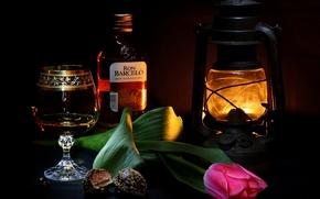 Обои широкоэкранные, lantern, HD wallpapers, обои, rum, полноэкранные, тюльпан, background, фонарь, glass, ром, fullscreen, candy, широкоформатные, ...