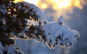 Картинка зима, солнце, лучи, снег, дерево, ветка
