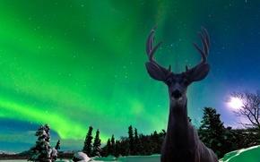 Картинка звезды, снег, ночь, северное сияние, силуэт, Олень, север зима