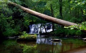 Картинка Вода, Природа, Деревья, Лес, Листья