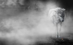 Картинка цветок, туман, Волк, art, wolfroad, the fog