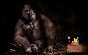 Картинка день рождения, праздник, обезьяна, торт