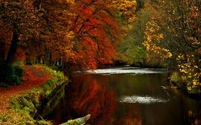 Обои природа, дорога, деревья, осень
