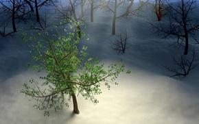 Обои snow, night, wood, tree, лучи, снег, листья, зима, ночь, лес, дерево