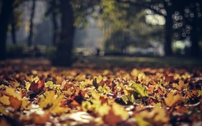 Картинка осень, листья, природа, боке