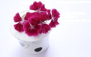 Картинка цветы, белый фон, ваза, гвоздики